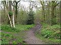 TM1931 : Paths diverge by Roger Jones