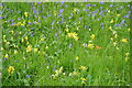 SO6921 : Bluebells and cowslips by Philip Halling