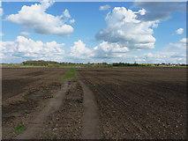 TL1643 : A footpath across farmland by Richard Law