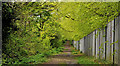J3977 : Path, Holywood (1) by Albert Bridge