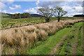 SD5746 : Track near Admarsh Barn Farm by Ian Taylor