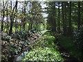 SK8555 : Path through Stapleford Wood by JThomas