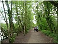 SJ7370 : Walking the dogs at Shakerley Mere by Christine Johnstone