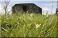 SU2799 : Cowslips and grass by Bill Nicholls