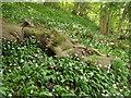 SU7530 : Hillside at Hawkley Hurst by Colin Smith