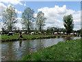 TM0633 : Cows near River Stour near Dedham by PAUL FARMER