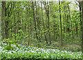 SE6971 : Cum Hag Wood by Pauline E