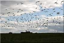 TA1974 : Kittiwakes filling the sky by Graham Hogg