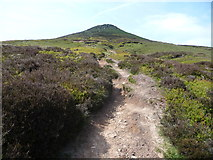SO2718 : Path up the Sugar Loaf's cone by Jeremy Bolwell