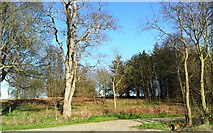 TM4477 : Forest track, Braker Hill, Suffolk by nick macneill