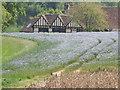 SU8147 : Flax Field by Colin Smith