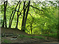 SP9008 : Beeches at The Crong by Rob Farrow