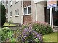 NS6161 : Garden in bloom at Melrose Court by Alan Reid
