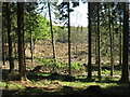 NO2251 : Forest clearing at Bamff by M J Richardson