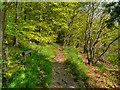 SD6412 : Old Rake Way, Wilderswood by David Dixon