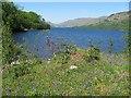 NN4308 : Loch Katrine by Richard Webb