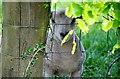 SS9508 : Mid Devon : Lamb behind a fence by Lewis Clarke