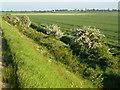 TF4827 : Hawthorn bushes on the sea bank by Richard Humphrey