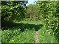 SU7331 : Noar Hill Common by Alan Hunt