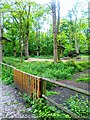 SJ4094 : High wire jungle park,  Croxteth Hall and Country Park by Alex McGregor