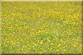 SO2824 : A sea of buttercups by Philip Halling