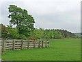 NZ0678 : Livestock pen and plantation near Belsay Dene by Oliver Dixon