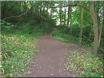 NZ3412 : Woodland path on the banks of the River Tees by peter robinson