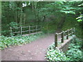 NZ3311 : Footbridge carrying The Teesdale Way in Dinsdale Wood by peter robinson