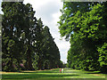 SP9911 : An Avenue in the Gardens at Ashridge House by Chris Reynolds