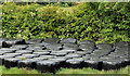J4767 : Silage bales near Comber by Albert Bridge