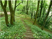 SK3463 : Steep woodland footpath to the River Amber by Andrew Hill