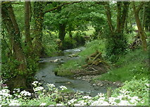SK3463 : River Amber near Ashover by Andrew Hill