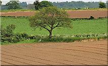 J2965 : Ploughed fields, Tullynacross near Lisburn (3) by Albert Bridge