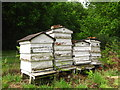 TM2543 : Old beehives behind Brightwell Church by Chris Holifield