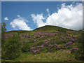 SD5148 : Rhododendrons in Grize Dale by Karl and Ali