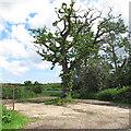 TM4193 : Oak near the track by Roger Jones