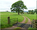 SO2442 : Sheep grid at the entrance to The Bricklands NE of Hay-on-Wye by Jaggery