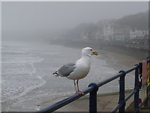 TA1280 : Filey: a seagull in gloomy weather by Chris Downer
