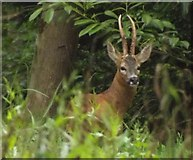 TQ0950 : Pleased to Meet You, Deer by Colin Smith