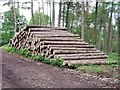 SK0443 : Timber stack in Threap Wood by Ian Calderwood