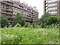 TQ3281 : Fann Street Wildlife Garden by David Hawgood