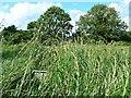 SU1586 : Pickard's Small Field, Gorse Hill, Swindon (4) by Brian Robert Marshall
