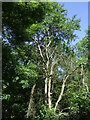 TL1770 : Brampton Wood by JThomas