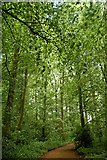 SU5598 : Path through Lime Wood by John Myers