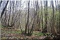 TQ8932 : Coppicing, Ratsbury Wood by N Chadwick
