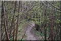 TQ8931 : High Weald Landscape Trail, Ratsbury Wood by N Chadwick