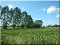 TL9463 : Sugar Beet Field by Paul Franks