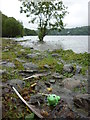 SD3892 : A good day for frogs, west shore of Windermere by Karl and Ali