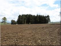 SN9770 : A plantation near Tynshimley by David Purchase
