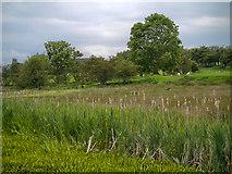 SD7908 : Farmland Near The Manchester, Bolton and Bury Canal by David Dixon